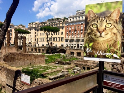 gatos-roma-playandtour