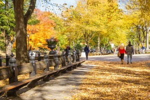 New York City, New York, USA - October 30, 2015: View of historic Central Park in Manhattan on an autumn day with people visible. Central Park is a notable location in Manhattan visited by both tourists and locals