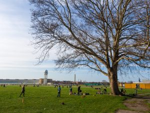 Berlin, Germany - April 20, 2013: Berlin, Germany - April 20, 2013: People exercising and socialising near a tree in Tempelhof Airport, Berlin, Germany. The airport ceased operation in 2008 and is now used for sports and events.